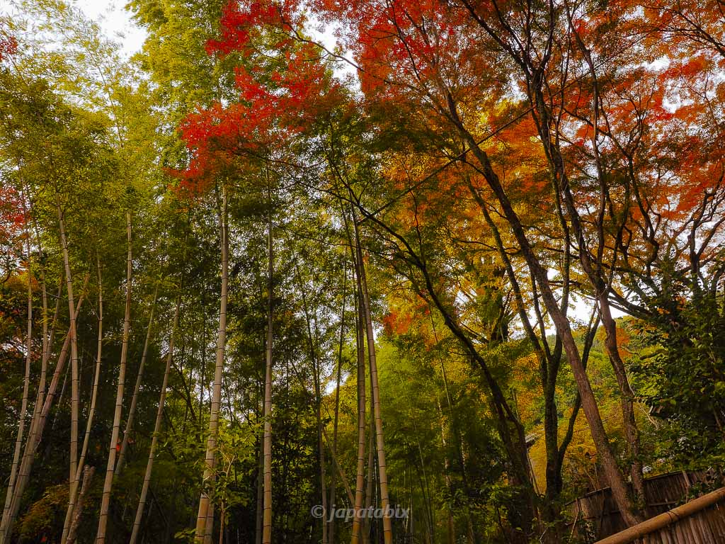 金蔵寺 竹林と紅葉