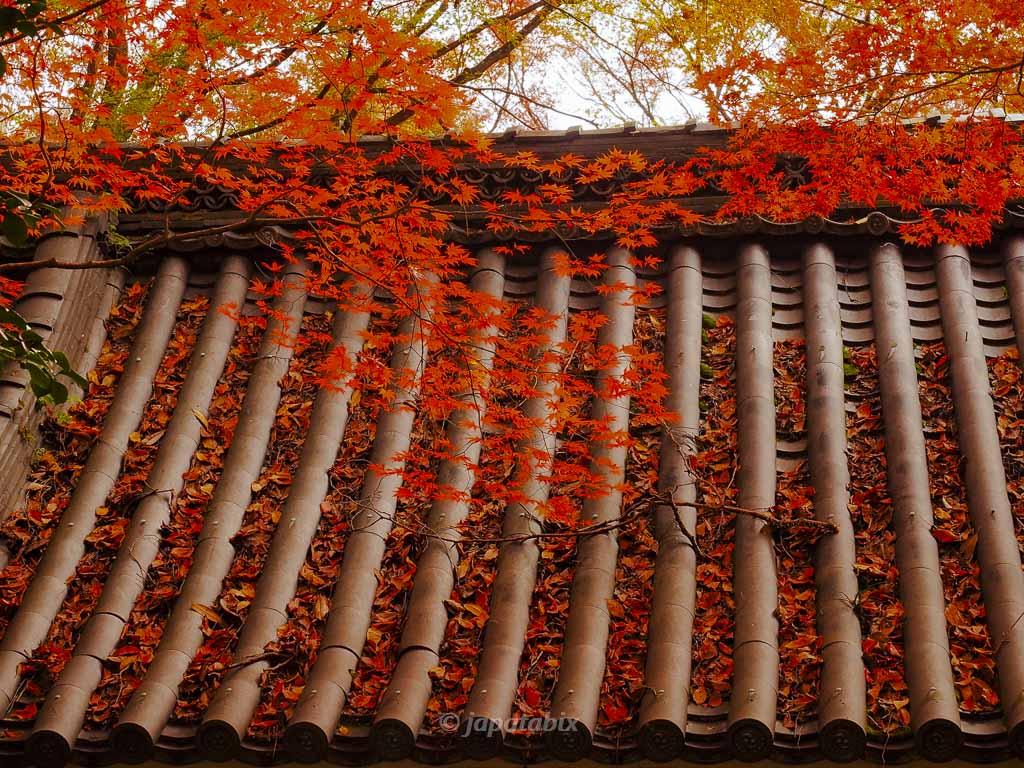 京都 金蔵寺 仁王門の紅葉