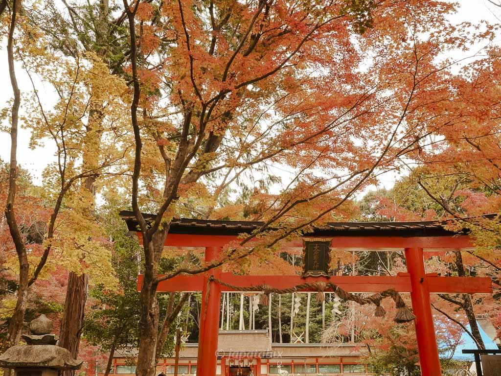 京都 大原野神社の紅葉と鳥居