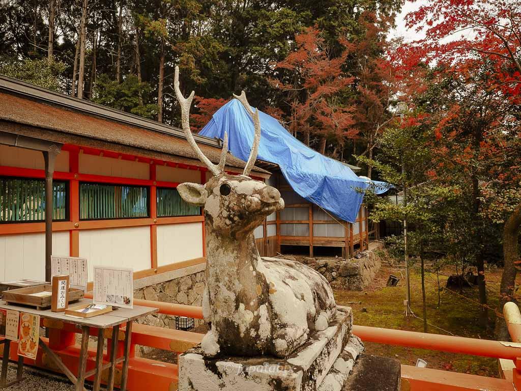 京都 大原野神社 神鹿