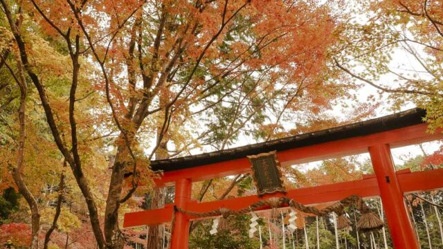 京都 大原野神社の紅葉