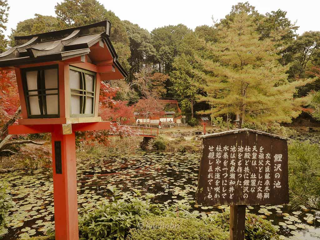 京都 大原野神社 鯉沢の池