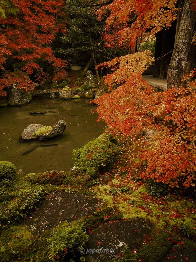 京都 蓮華寺の紅葉