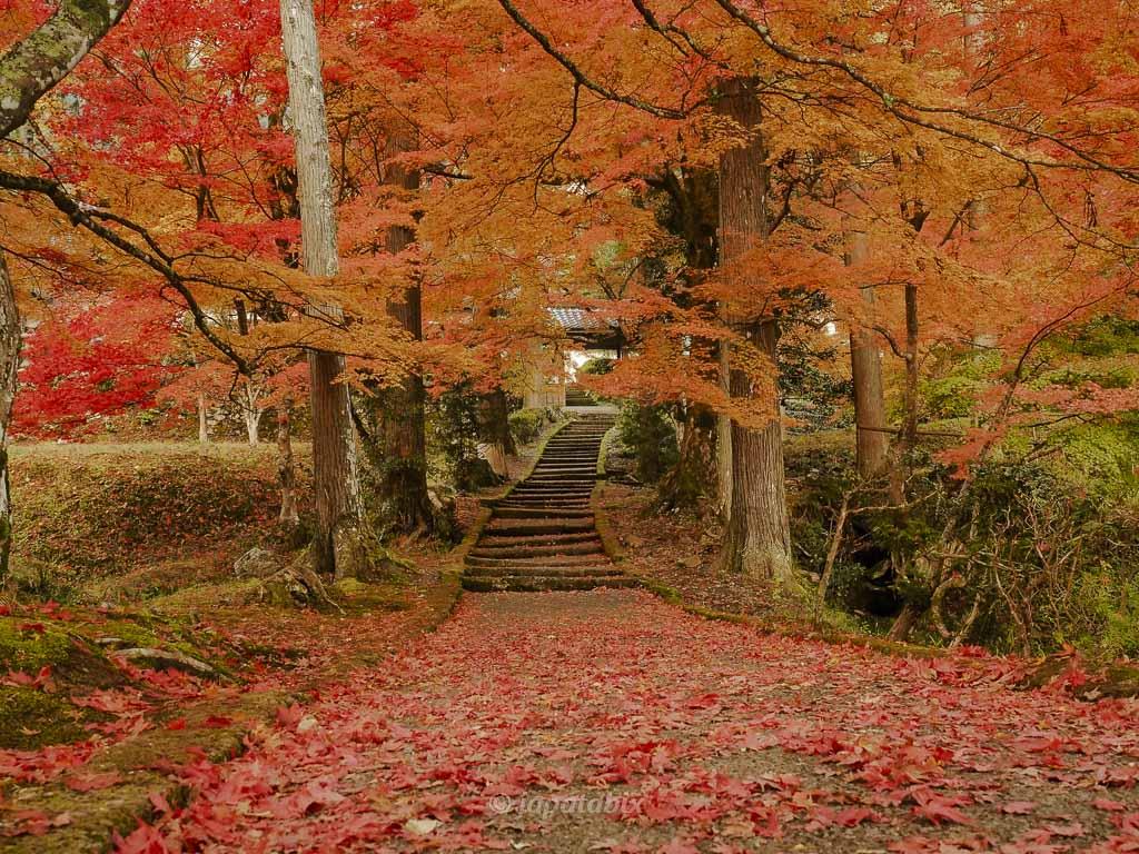 京都 龍穏寺の紅葉