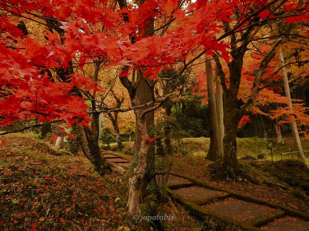 京都 龍穏寺 参道の紅葉