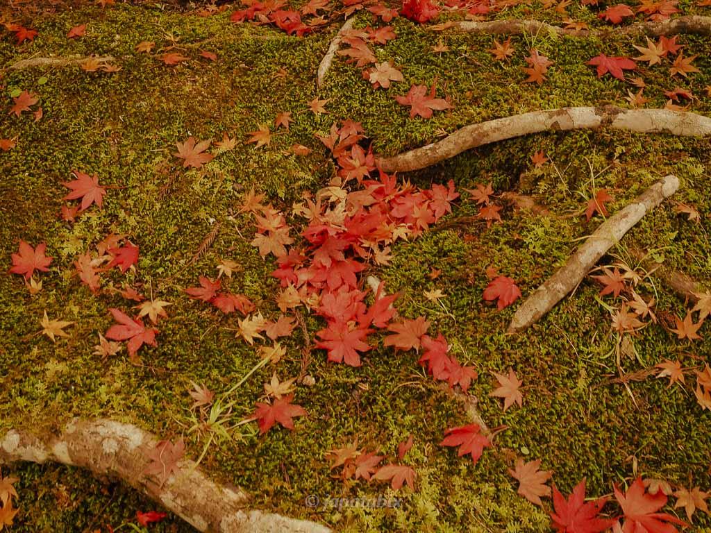 京都 龍穏寺の散紅葉