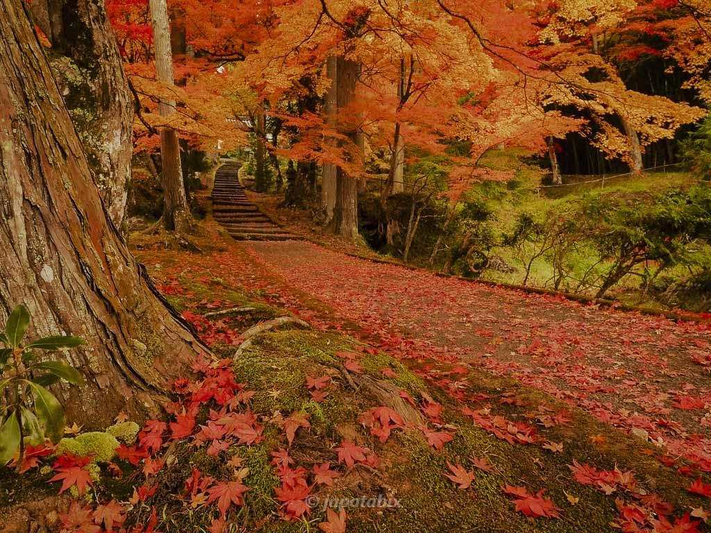 京都 龍穏寺 参道の散紅葉
