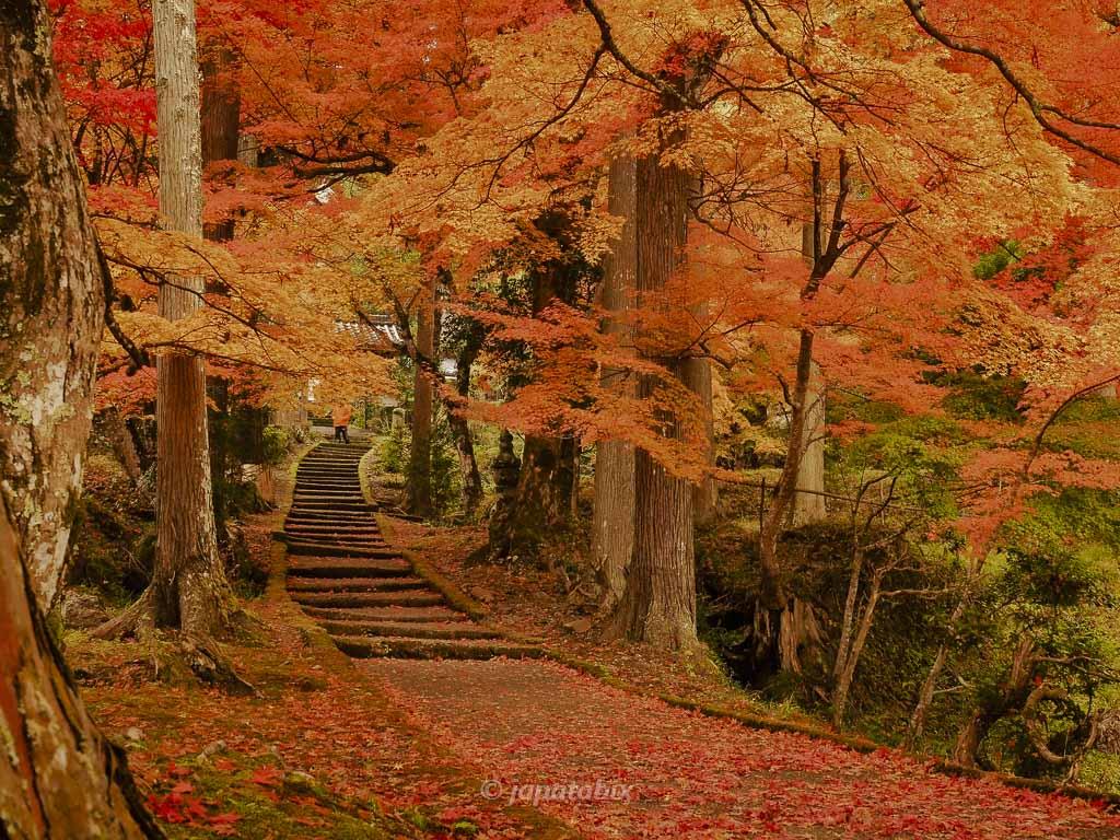 京都 龍穏寺 参道の紅葉トンネル