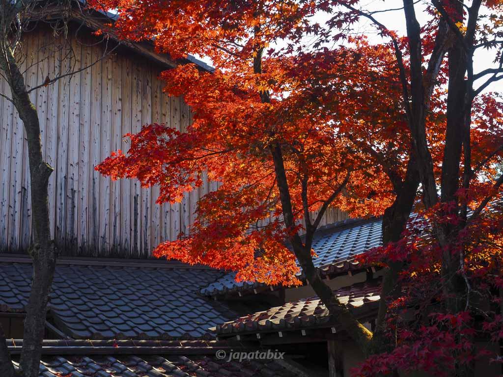 京都 真如堂(真正極楽寺)の紅葉