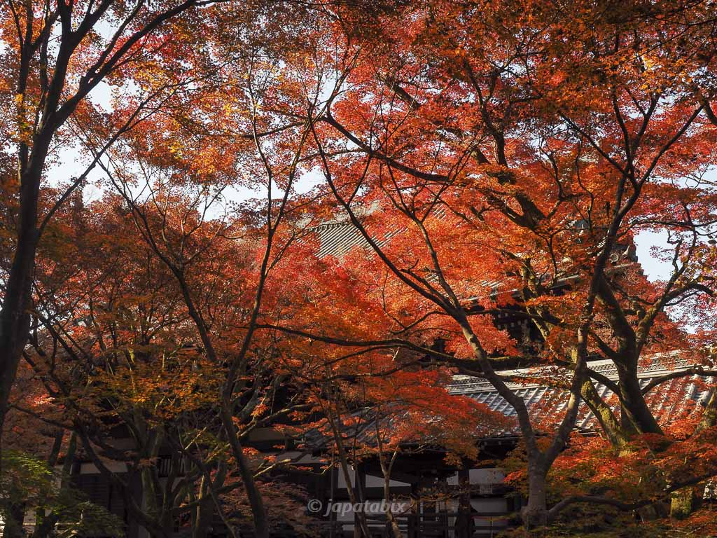 真如堂(真正極楽寺)書院から見る紅葉