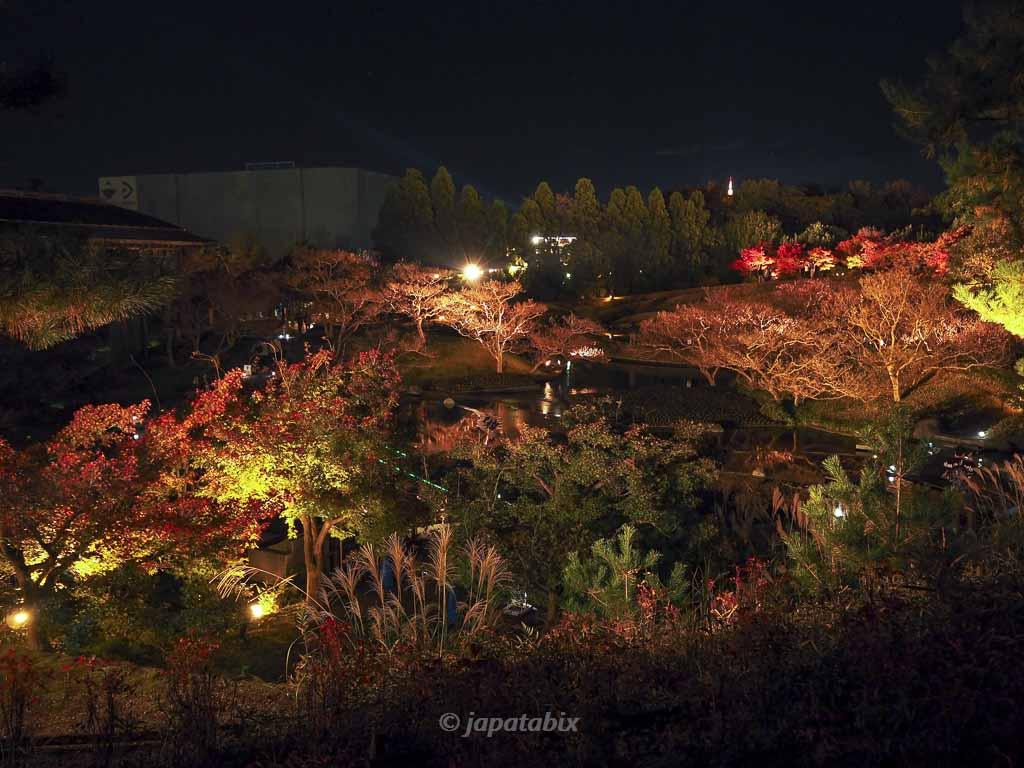 京都 梅小路公園の紅葉まつり 朱雀の庭