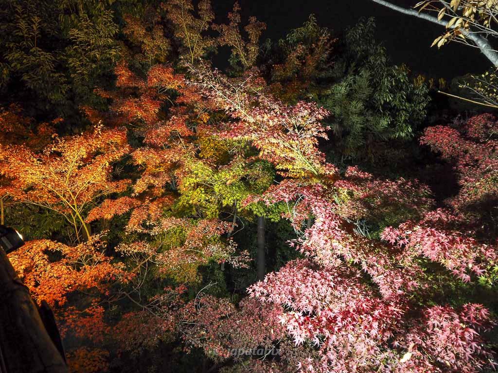 京都 梅小路公園の紅葉まつり 朱雀の庭 紅葉渓