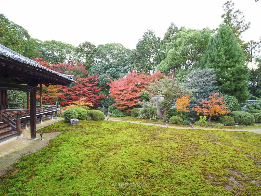 京都 随心院 庭園の紅葉