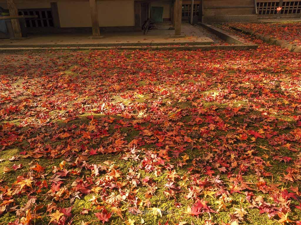 法然院の紅葉 本堂・方丈