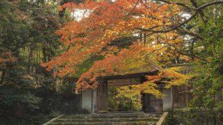 京都 法然院の紅葉