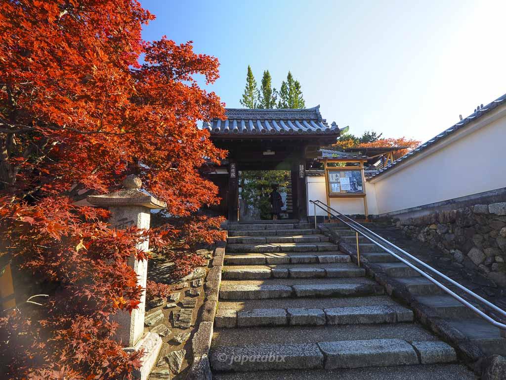 京都 光明院の紅葉