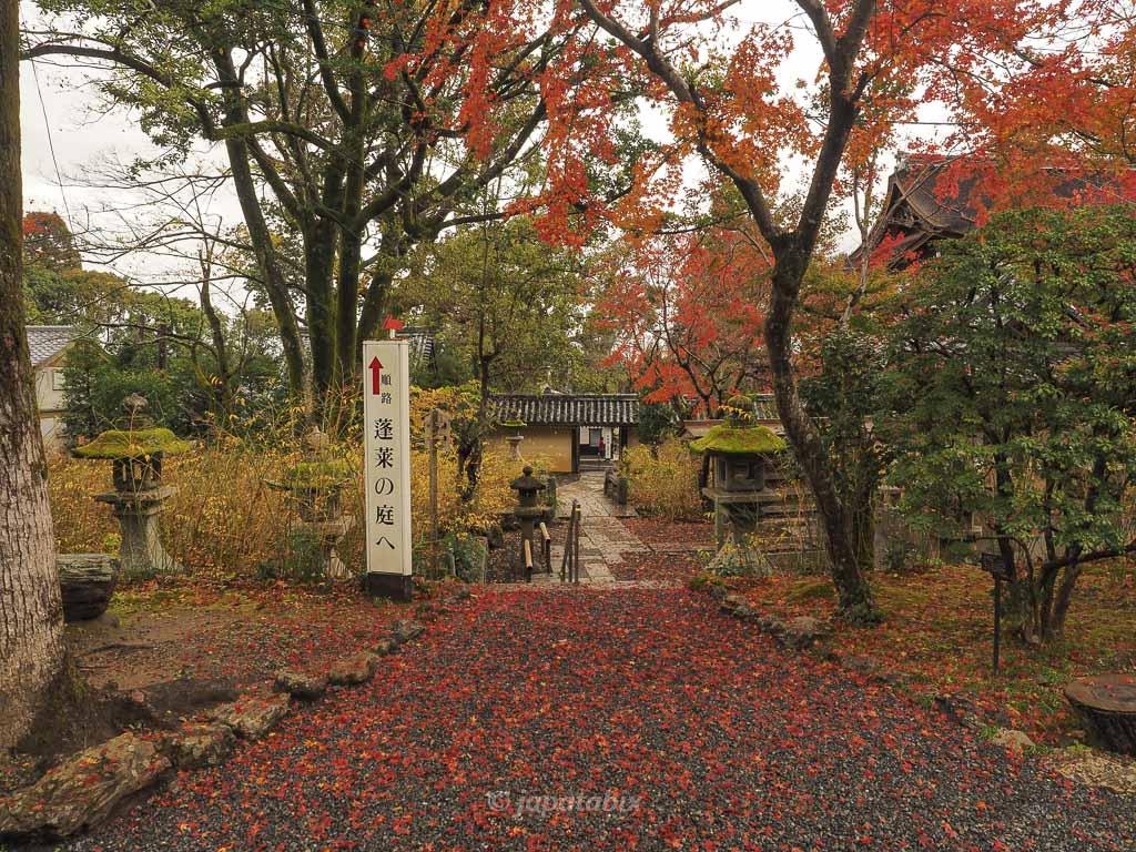 京都 松尾大社の紅葉
