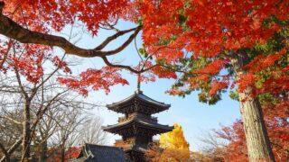 京都 真如堂の紅葉