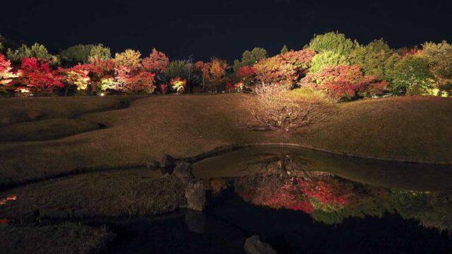 京都 梅小路公園の紅葉ライトアップ