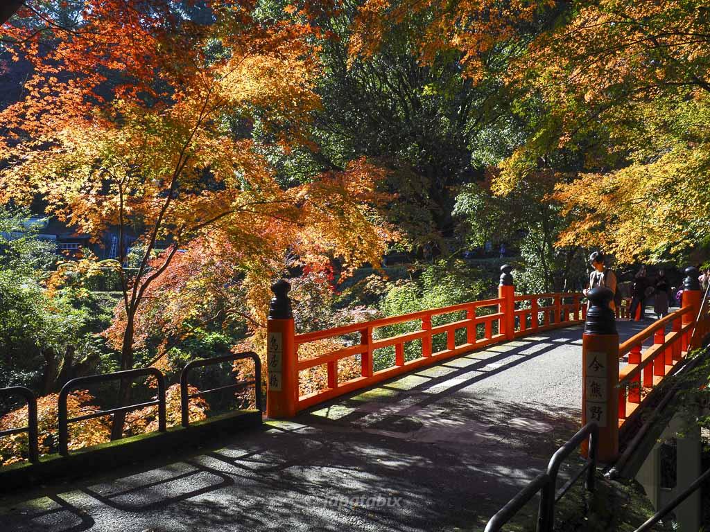今熊野観音寺 鳥居橋の紅葉