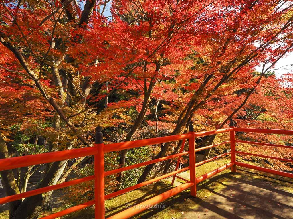 今熊野観音寺 お茶所の素晴らしい紅葉