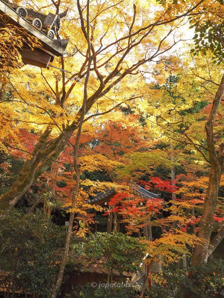 今熊野観音寺 本堂周辺の紅葉