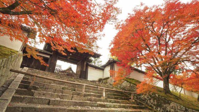 京都 曼殊院門跡 勅使門前の紅葉